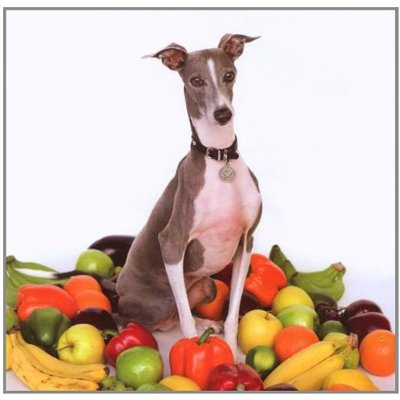 Shellac - Excellent Italian Greyhound