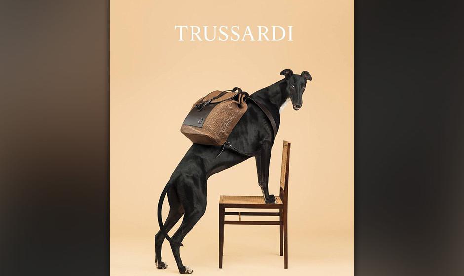 Backpack sensation: William Wegman für Trussardi
