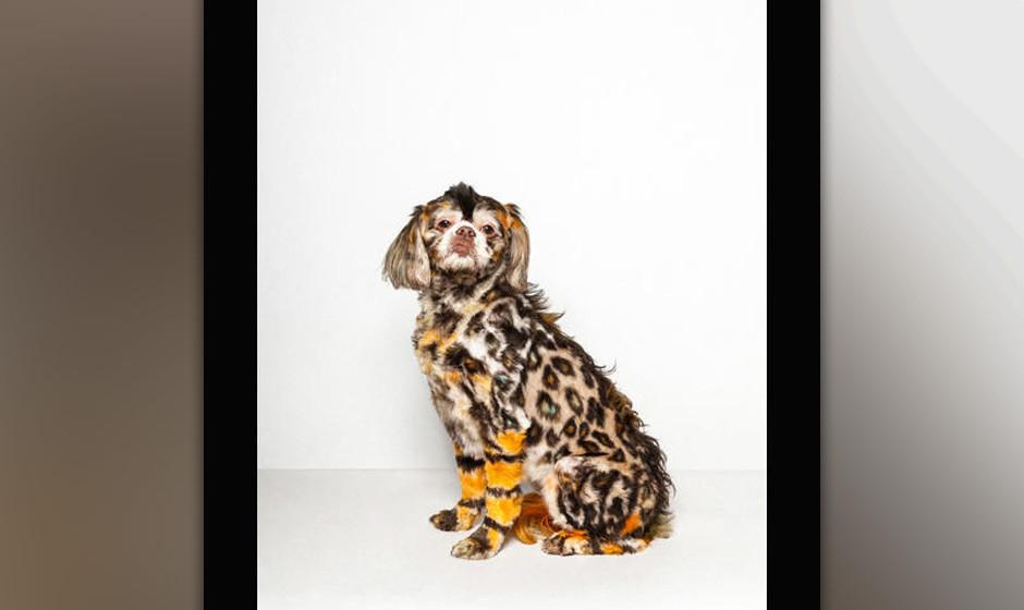 Hunde-Figaro hätte man werden sollen: Paul Nathan hat die verrücktesten Hunde-'Frisuren' abgelichtet.