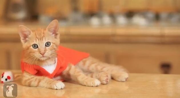 Piper Chapman aka. das getigerte Kätzchen