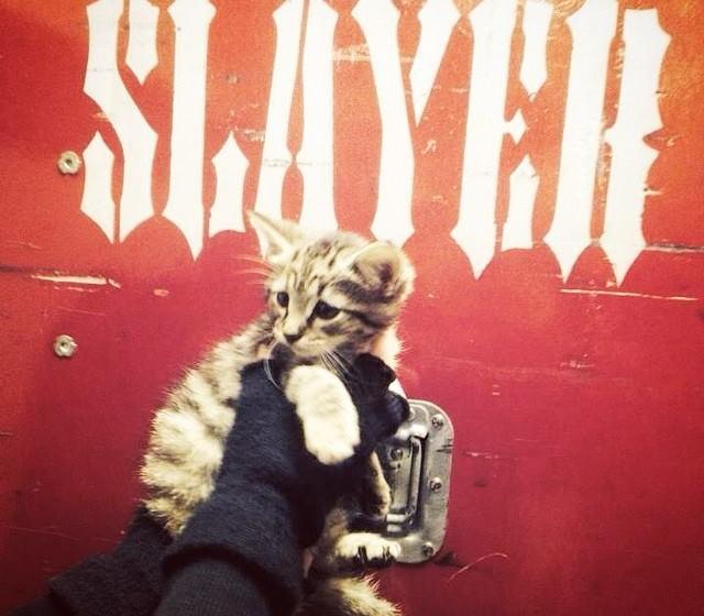 Slayer retten süßes Kätzchen