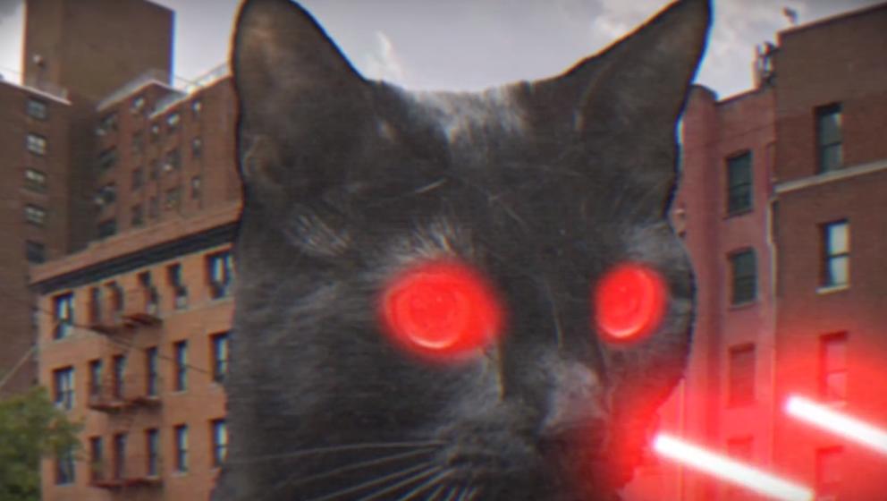 """Katzen mit Laser-Augen im neuen Video von Run The Jewels zum Song """"Oh My Darling (Don't Meow)""""."""