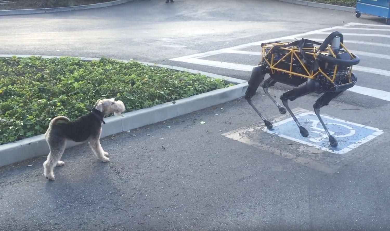 "Terrier Cosmo trifft auf den Roboter ""Spot""."