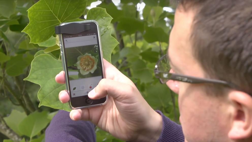 Ein Foto genügt und die App verrät welche Pflanze man vor sich hat.
