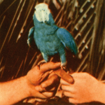 andrew-bird-are-you-serious-new-album