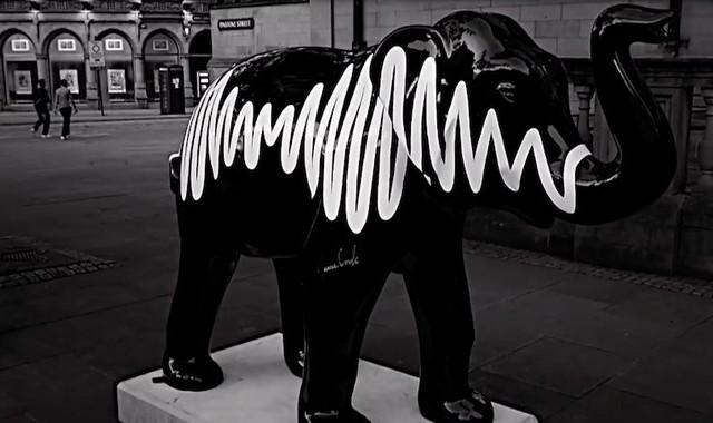 Diesen Elefanten mit dem Artwork ihres Albums AM haben die Arctic Monkeys unterzeichnet.