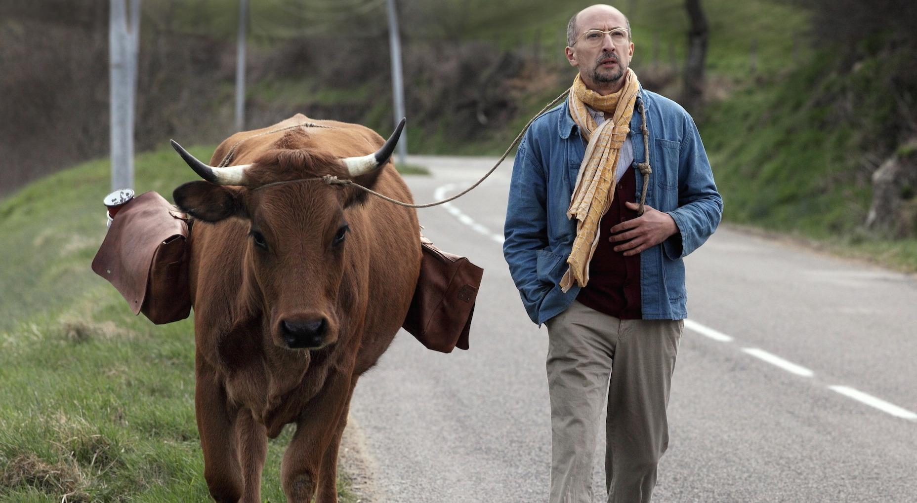 Fatah legt mit seiner geliebten Kuh Jacqueline über 700 Kilometer zu Fuß zurück.