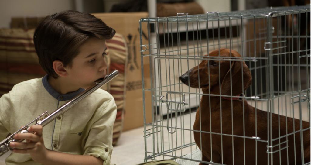 Die neue Besitzerin des Hundes möchte seinen Willen brechen.