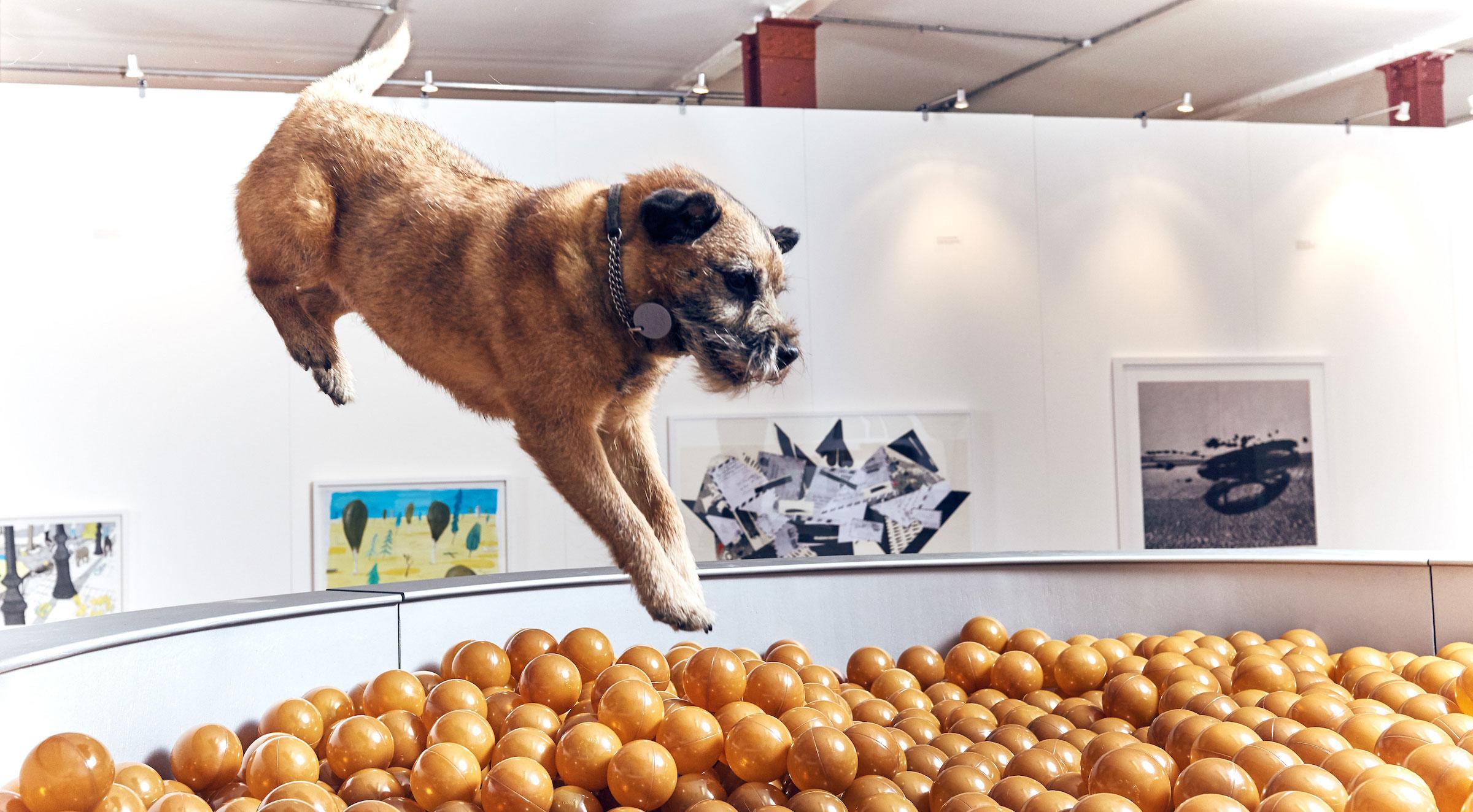 Bei der Play-More-Ausstellung gibt es Bällebäder für Hunde