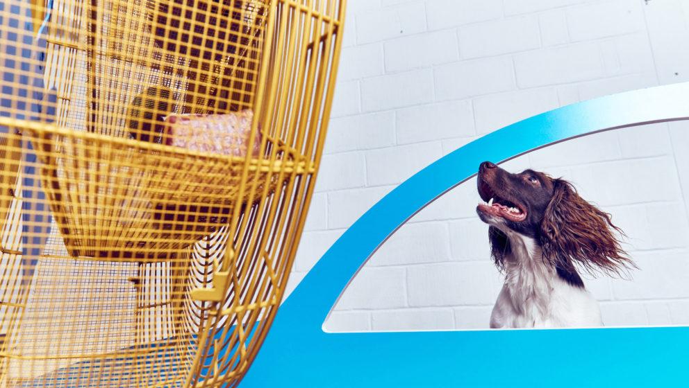 """""""Cruising Canines"""" simuliert ein offenes Autofenster während der Fahrt."""