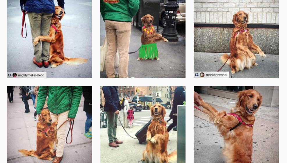 Louboutinas Profil auf Instagram