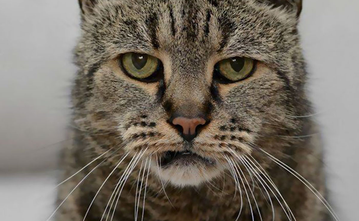 Die älteste Katze der Welt ist sichtlich not amused von dem