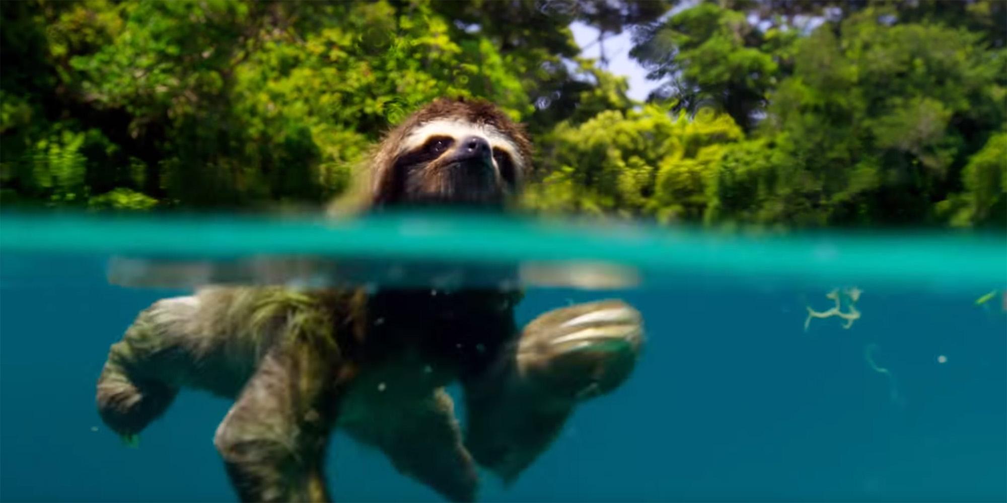 Ein schwimmendes Faultier. Allein dafür haben sich 10 Jahre Wartezeit gelohnt.