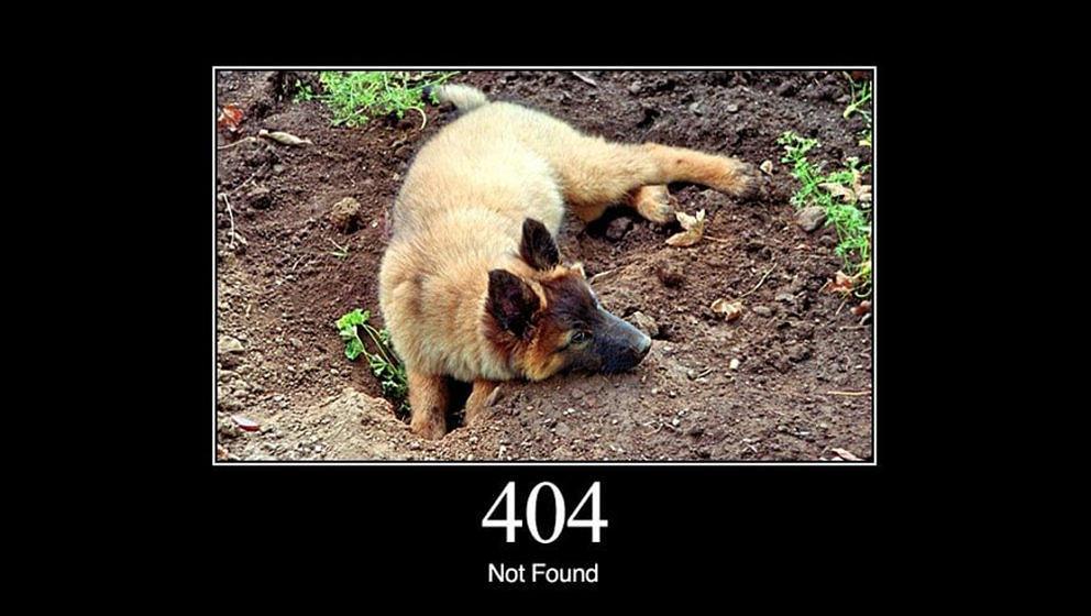 Warum ist da vorher noch niemand draufgekommen? HTTP-Fehlermeldungen, erklärt mit Hundebildern.