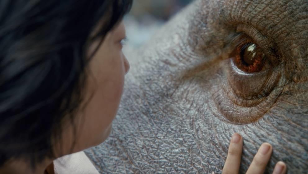 """In """"Okja"""" will ein kleines Mädchen ihr Schwein retten. Dieses wurde aber von der Lebensmittelindustrie gezüchtet."""