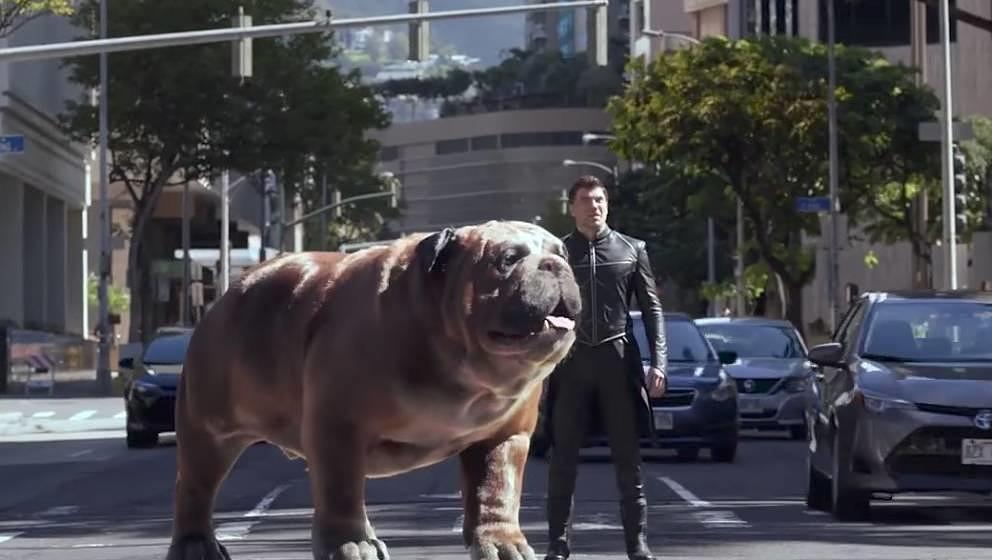 Ach schau her: Ein großer Hund.