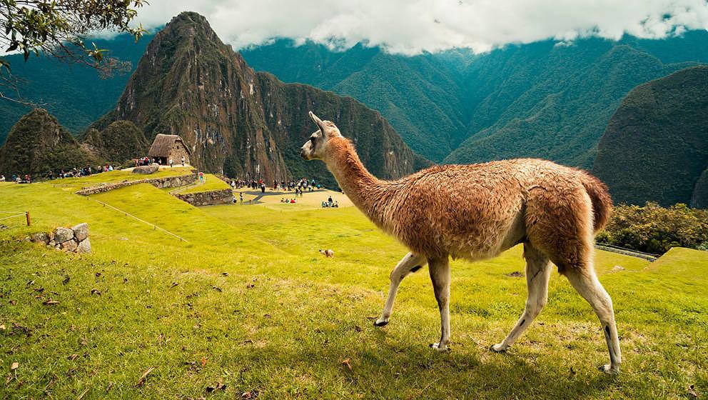 Das Lama ist das Maskottchen von Winamp