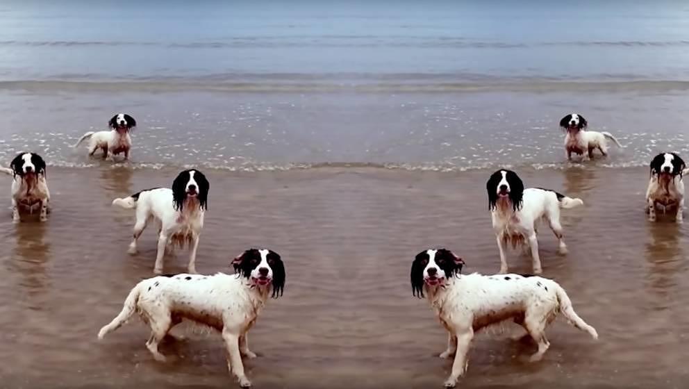 Hunde am Strand: Große Kunst.