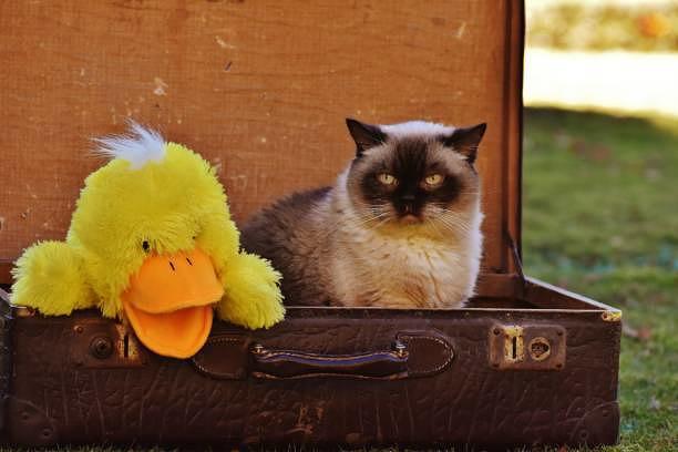 Taylor Swift (l.) und ihre Katze Olivia Benson schälen sich aus dem Koffer.