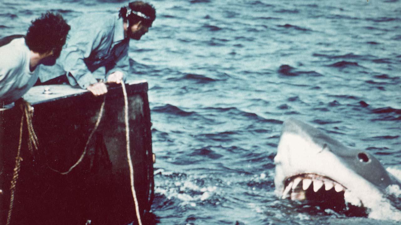 Ein weißer Hai sorgt für Angst und Schrecken
