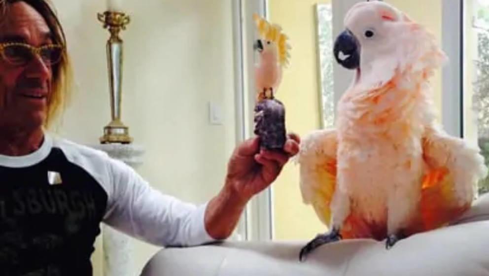 Iggy Pop und sein Kakadu