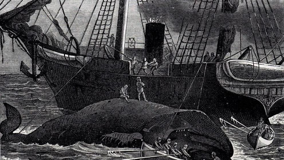 An engraving depicting the cutting up of a whale. Dated 19th century. (Photo by: Universal History Archive/Universal Images G